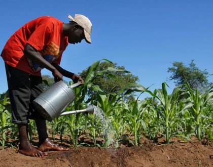 Enrollment of students into agric colleges dwindling – Scientists